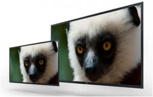 sony-monitori