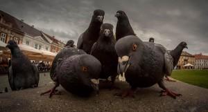 Компания Google запустила новый алгоритм — Pigeon